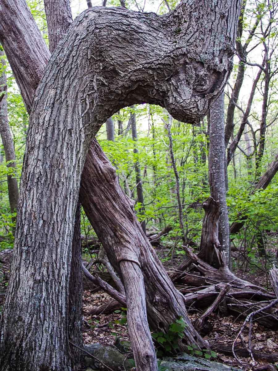 Каньон белого дуба